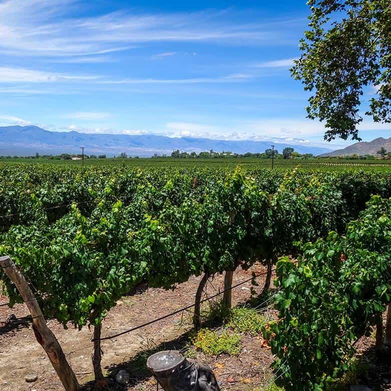 Weinkellerei Meraner Argentinien