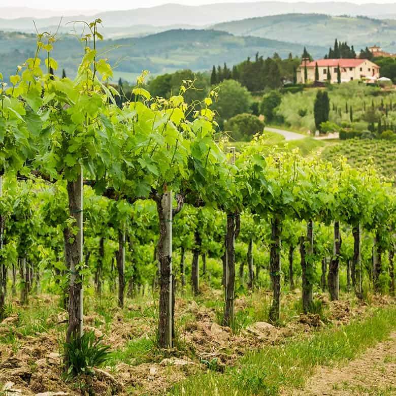 Weinkellerei Meraner Italien
