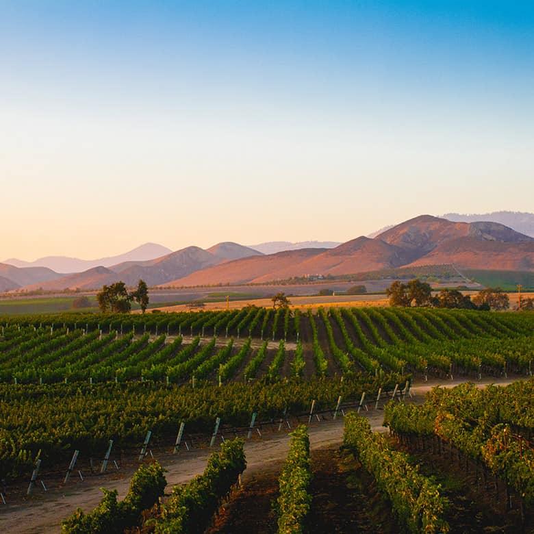 Weinkellerei Meraner Kalifornien