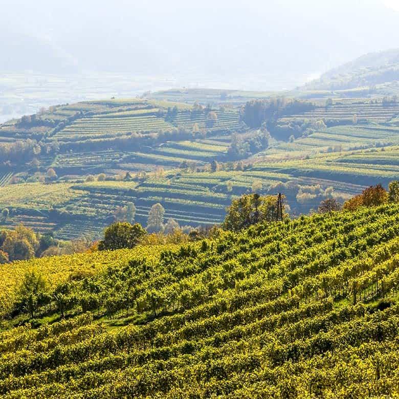 Weinkellerei Meraner Österreich