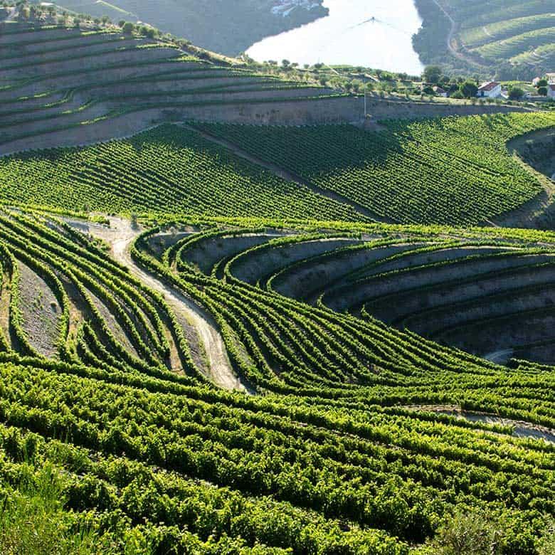 Weinkellerei Meraner Portugal