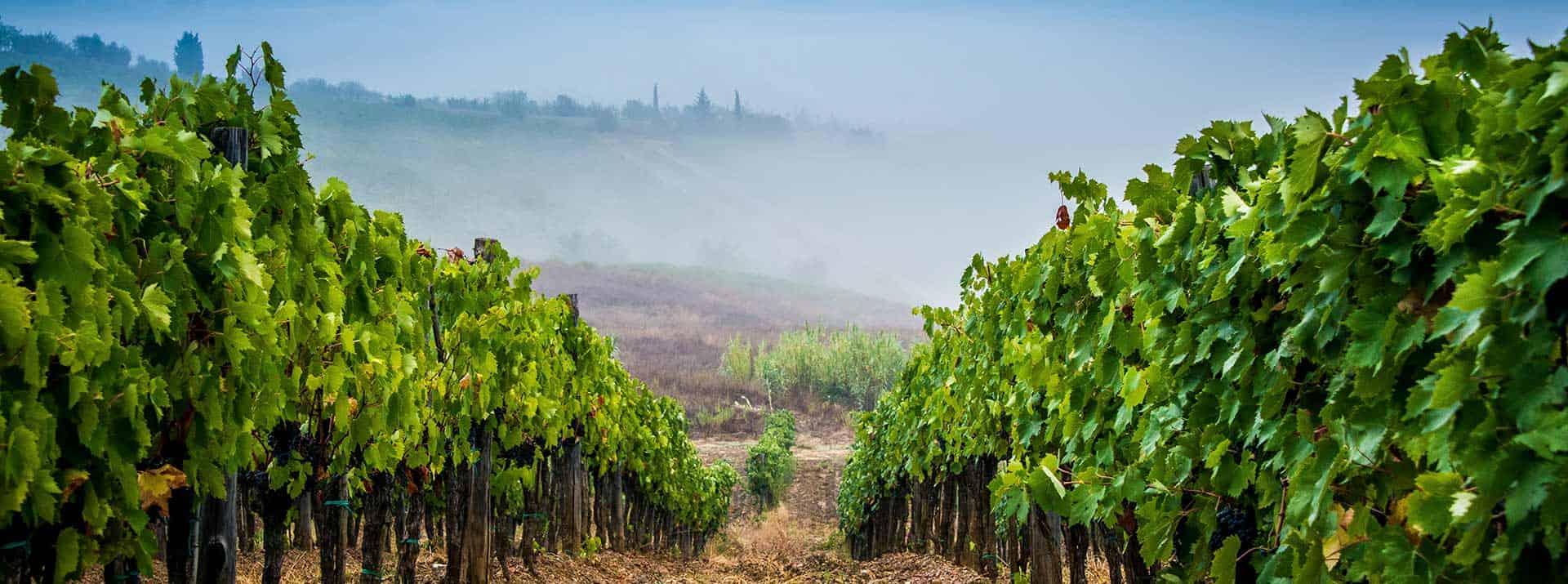 Weinkellerei Meraner Weine aus Italien