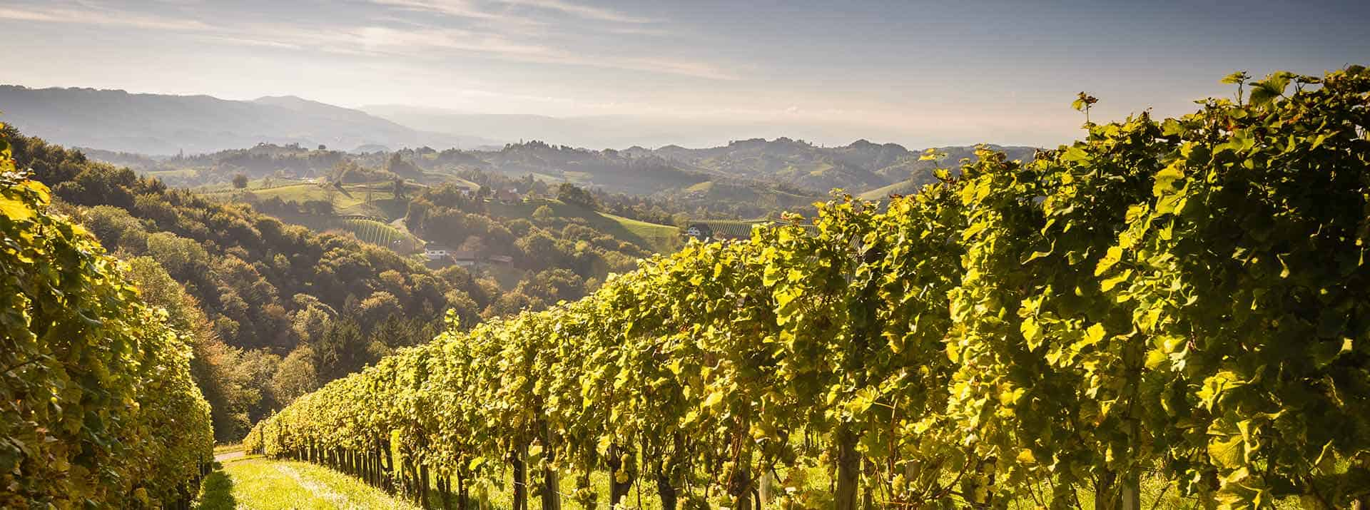 Weinkellerei Meraner Weine aus Österreich
