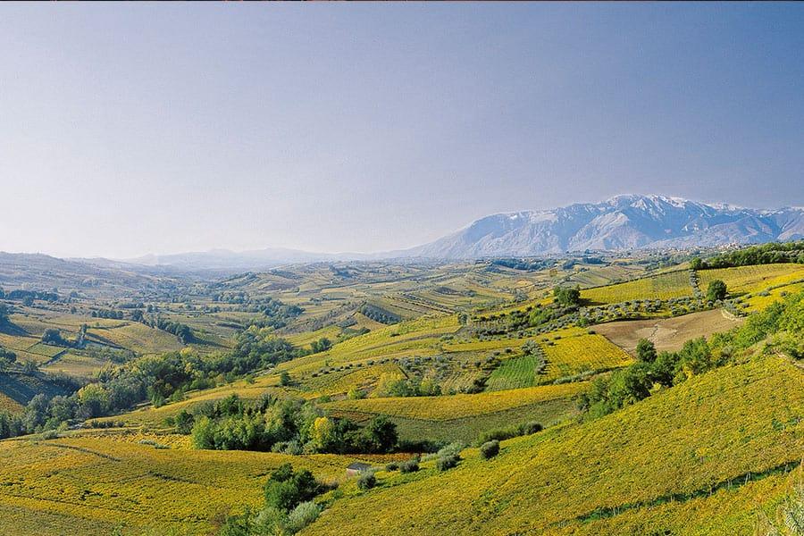 Weinkellerei Meraner Cantina Colle Moro
