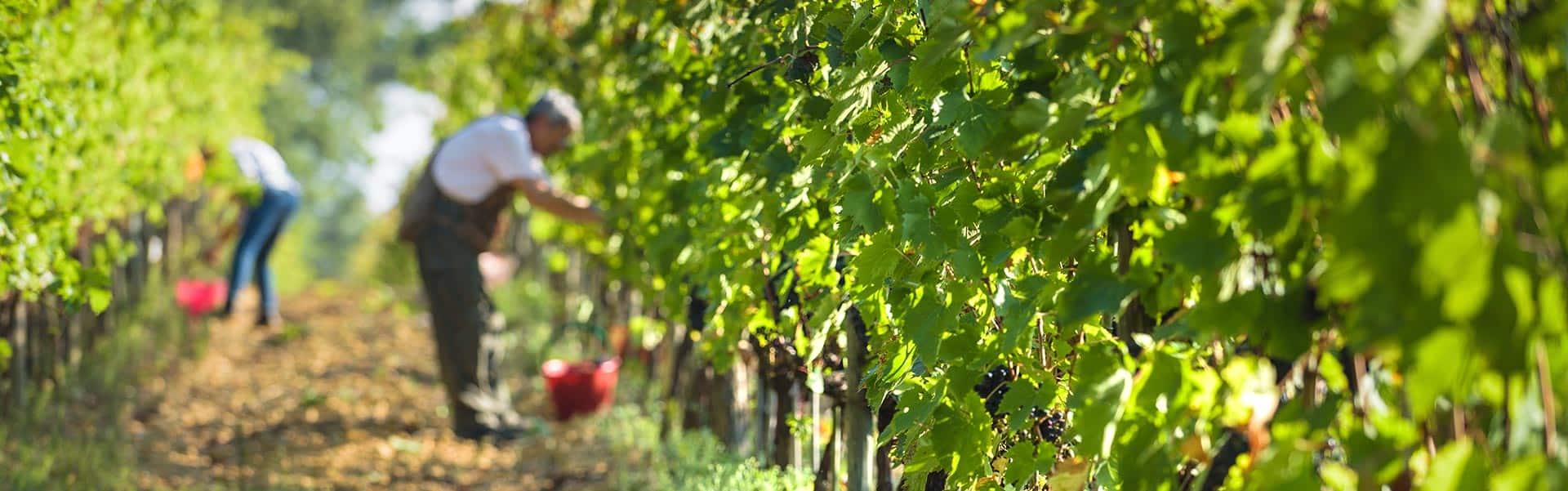 Weinkellerei Meraner Toskana Ruffini und Bolgheri