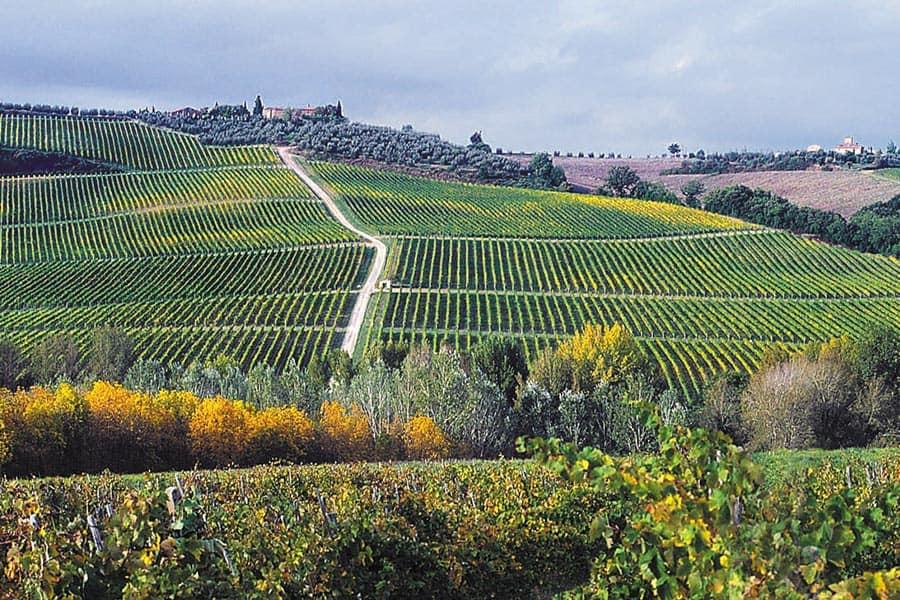 Weinkellerei Meraner Rocca delle Macie