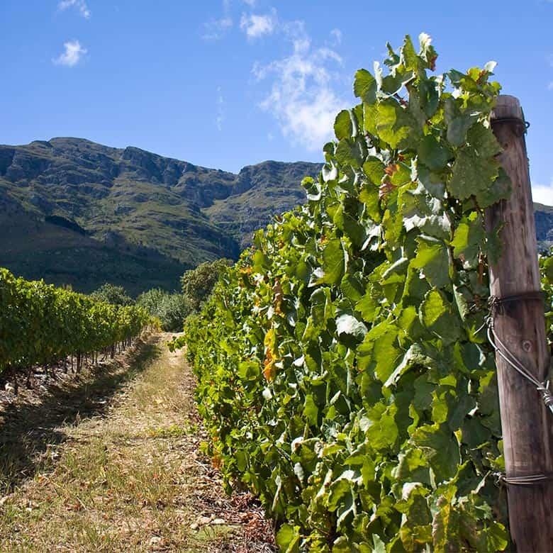 Weinkellerei Meraner Südafrika