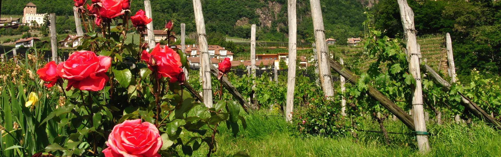 Weinkellerei Meraner Südtirol Meran Neustift