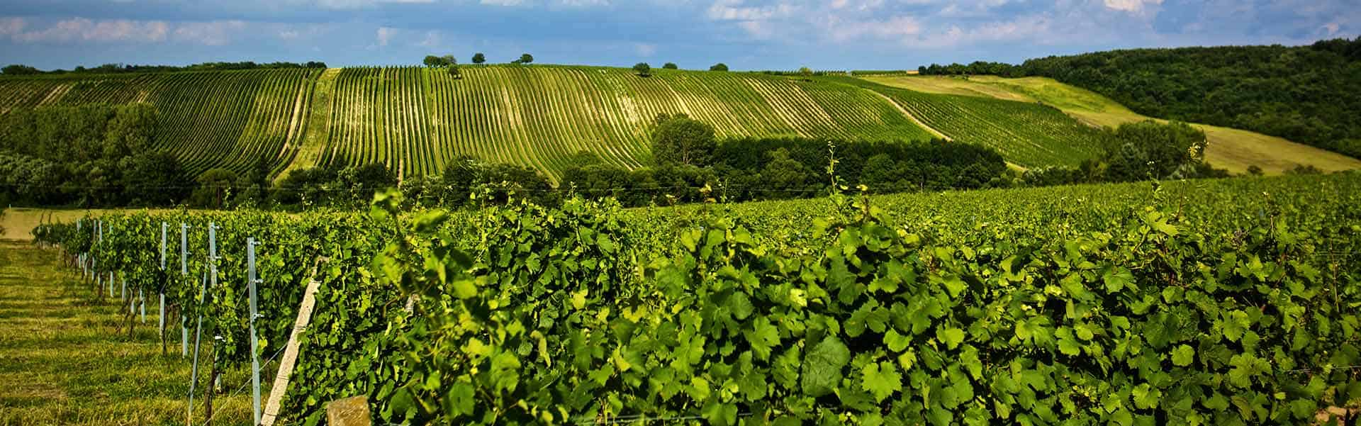 Weinkellerei Meraner Weingut Gesellmann