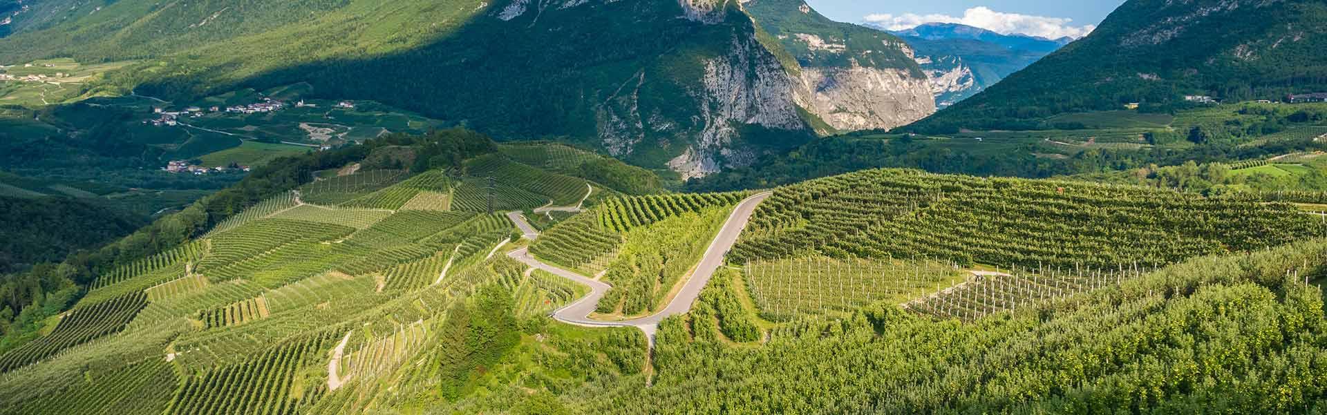 Weinkelllerei Meraner Trentino