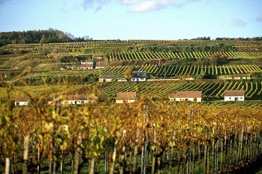 Weinkellerei Meraner Weinwerk Bründlmayer