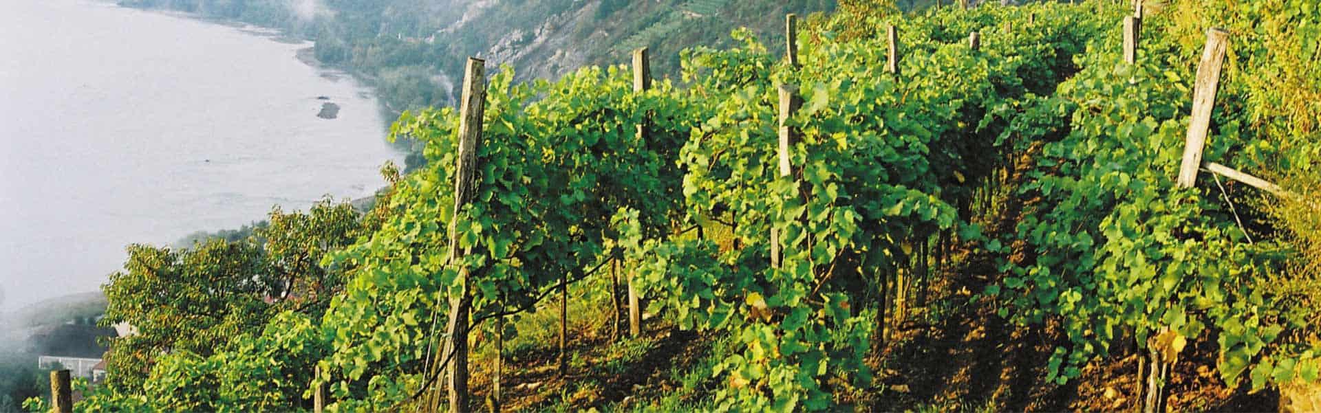 Weinkellerei Meraner Franz Hirtzberger